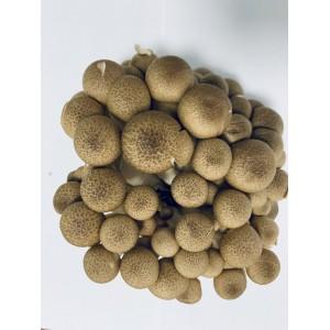 Shimeji brunatne 150 g